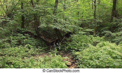 Summer deciduous forest panning