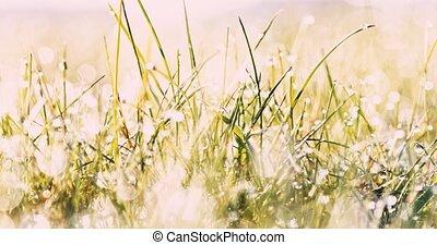 Summer dew, wet grass - Sunny summer morning dew on grass....
