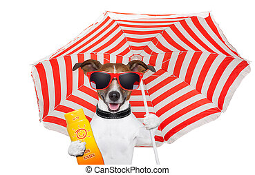 summer dog  - dog in the summer with umbrella