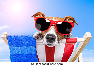 summer dog vacation holiday