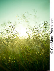 Summer Dry Grass - Long summer dry grass against a sunset.