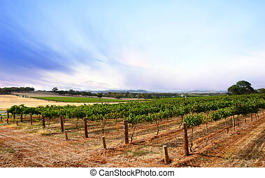 Summer Dusk Vineyard