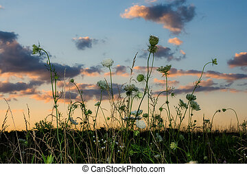Summer Dusk wildflowers - Wildflowers in a Suumer field at...