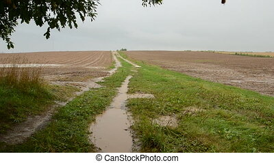 summer end rain in the fields