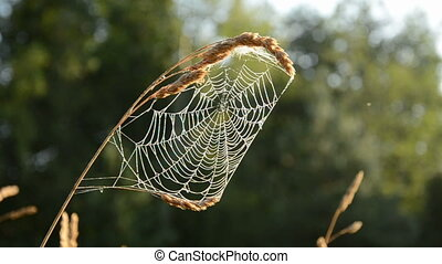 summer end time spider-web in morning light