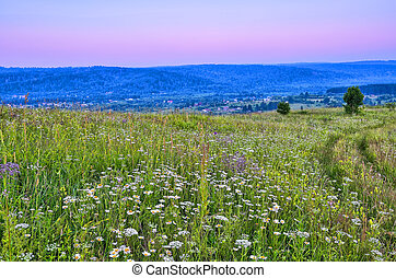Summer evening landscape over hills and flowering meadow