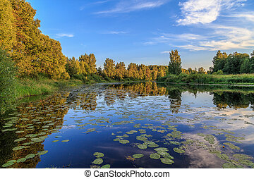 Summer evening, the river with water lilies