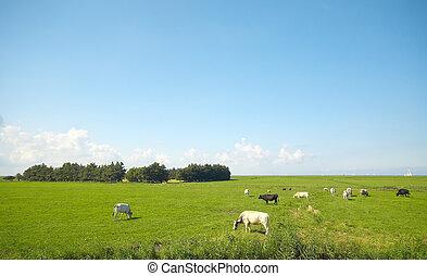 summer farmland