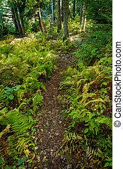 Summer Ferns Nature Trail
