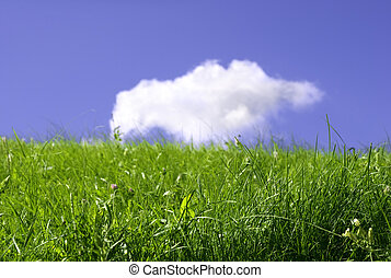 summer field and cloud - fresh meadow, focus point on ...