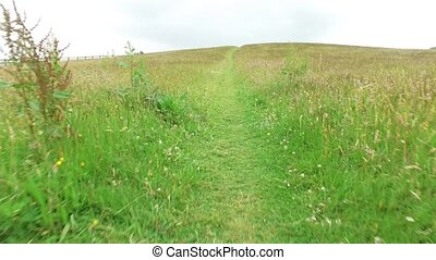 summer field and path 59 - nature and environment concept -...