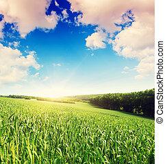 Summer field and sunlight in blue sky. Overcast sky....