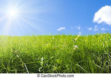 summer field - fresh meadow, focus point on nearest grass, ...