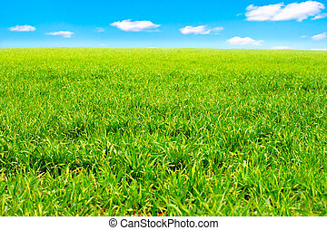 summer field