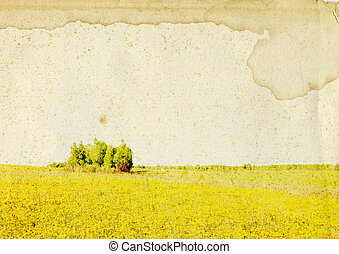 summer field on grunge background