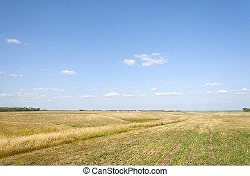 Summer field under a blue sky.