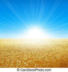 Summer field under the morning sun