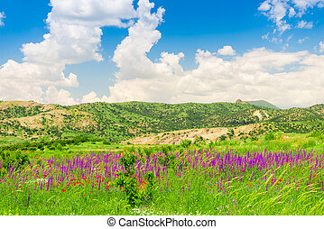 Summer field with beautiful purple flowers in the highlands on a summer sunny day