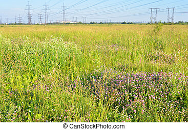 Summer field with flowers.
