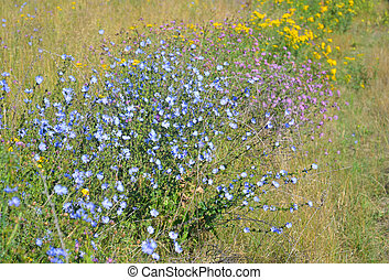 Summer field with wild flowers.