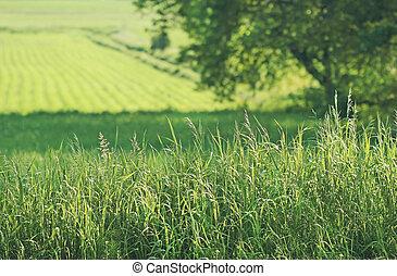 Summer fields of green