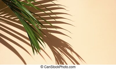 Summer flat lay scenery with tropical palm leaves on coral pink background with copy space