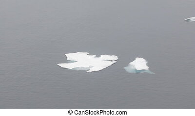 Two floating in sea ices. Camera zooms
