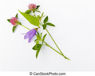 flower composition - summer flower composition