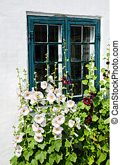 Summer flowers at a window - Summer flowers, hollyhocks, in ...