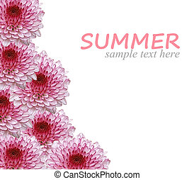 Summer flowers background isolated