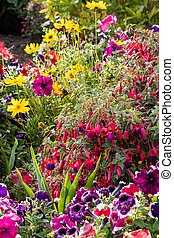 Summer flowers blooming in a flowerbed in an English garden