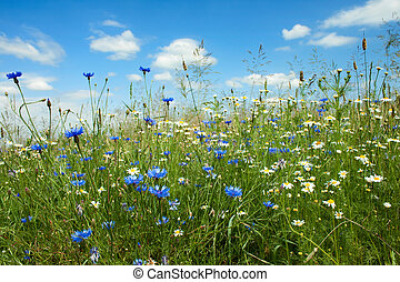 Summer flowers field - Summer field with wild flowers, ...