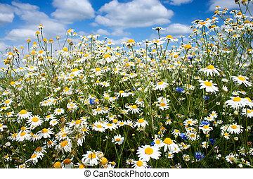 Summer flowers field