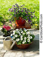 Summer flowers in a garden