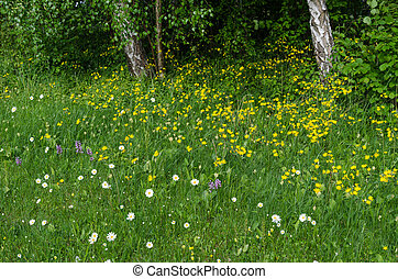Summer flowers in a green grass area