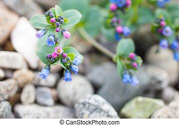 Summer flowers on the stony beach 2