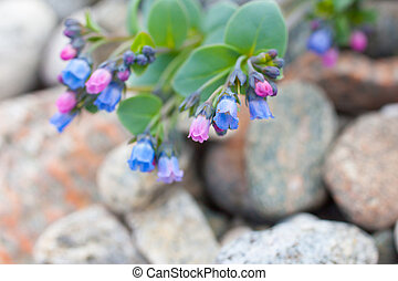 Summer flowers on the stony beach 3