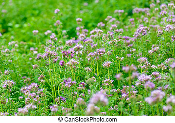 Summer flowers outdoors in the meadow