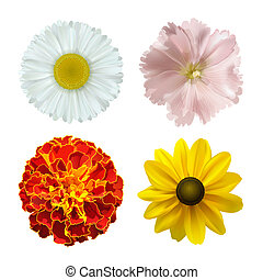 Summer flowers - set of different summer flowers on a white ...
