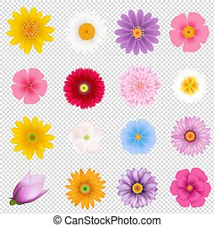 Summer Flowers Set Transparent background