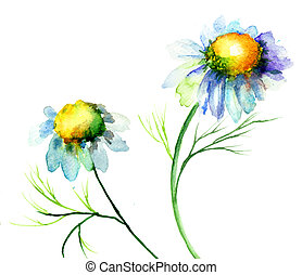 Summer Chamomile flowers, watercolor illustration