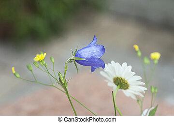Summer flowers - Wild summer flowers, e.g. bluebell and ...