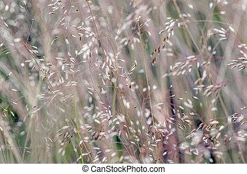 Summer fluffy grass