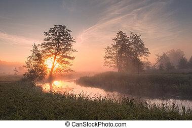 Summer foggy sunny morning