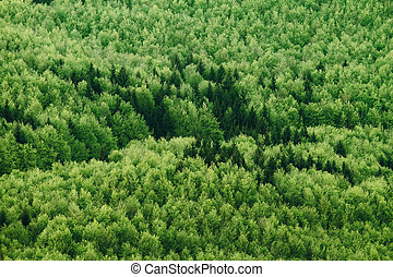 Aerial view of summer forest
