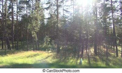summer forest blur landscape