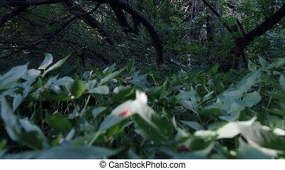 summer forest daylight
