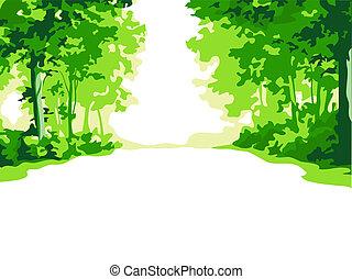 Summer forest - Green summer forest road background