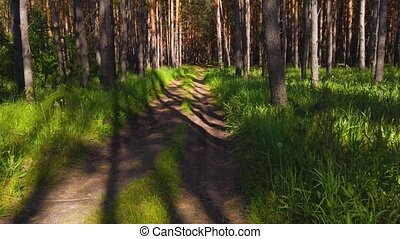 Summer forest in the beauty sunny day. Walking path in green fresh forest.