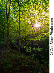 summer forest in the morning. beautiful nature background...